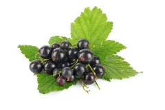 svarta vinbär vitaminer